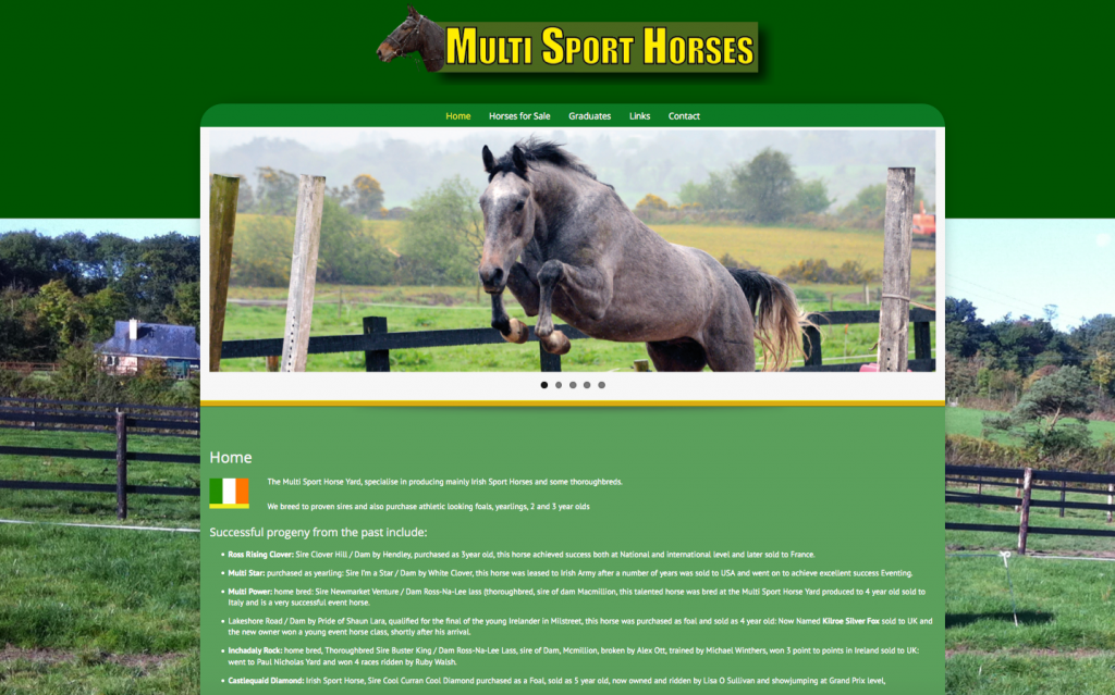 Multi Sport Horses