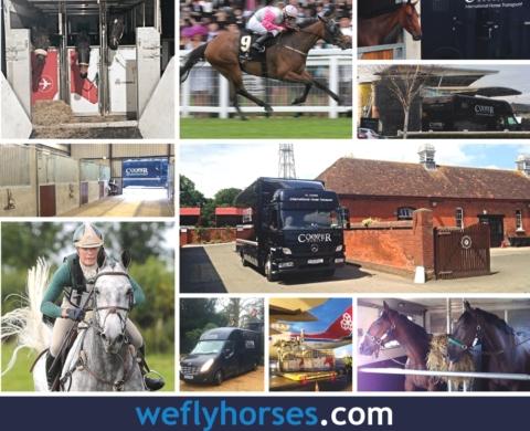 Cooper International Horse Transport