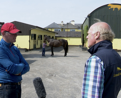 Tattersalls Ireland Derby Sale 2020